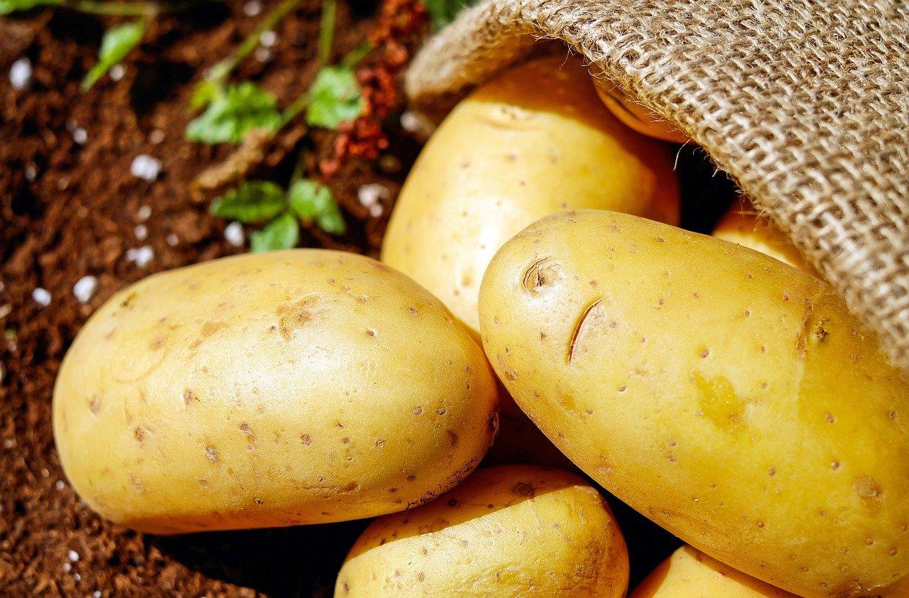 https://www.graineteriesimon.fr/wp-content/uploads/2021/02/potatoes-1585060_1280.jpg
